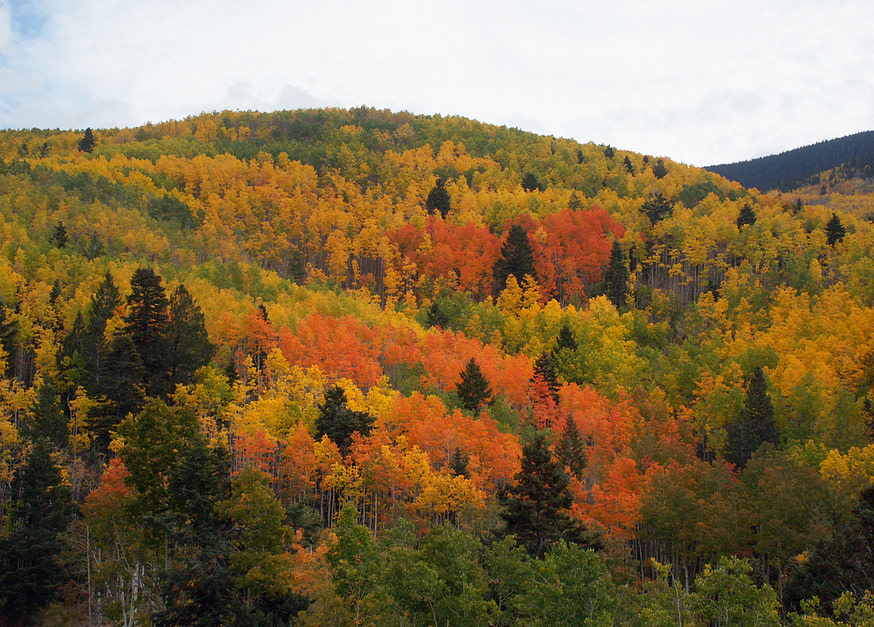 Taos, New Mexico fall colors
